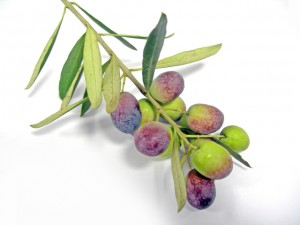 olives-1239548-640x480