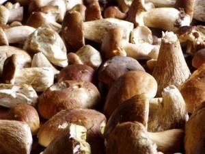 mushroom-1524014-640x480